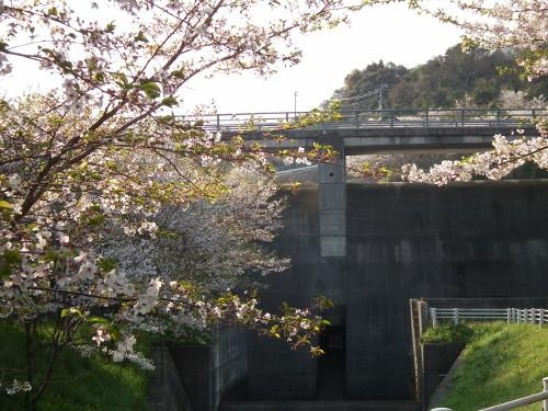 110416sakurayama1.jpg