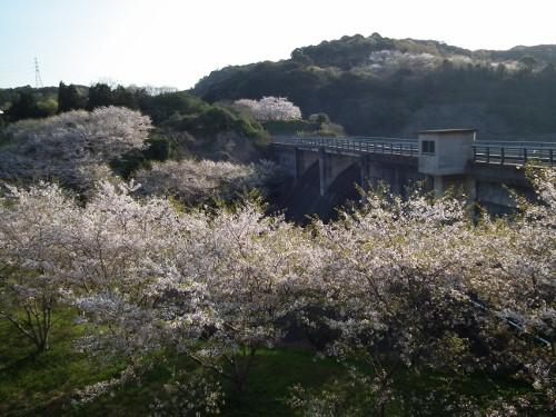 110416sakurayama2.jpg