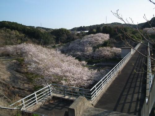110416sakurayama3.jpg