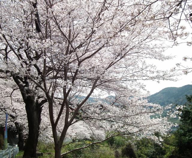 201200402wasansirou1.jpg