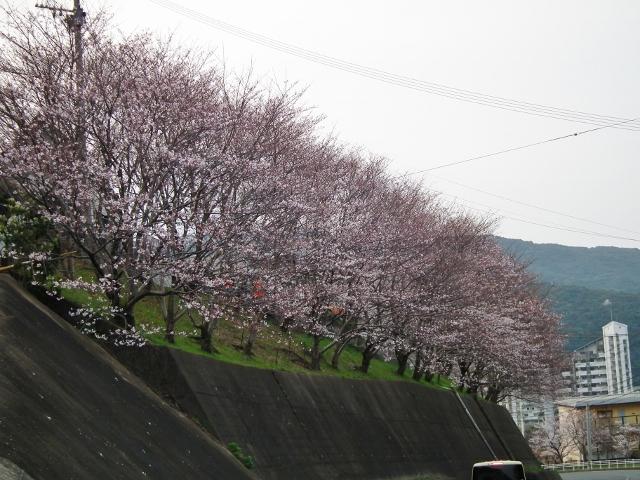 20120330sakuranosato1.jpg