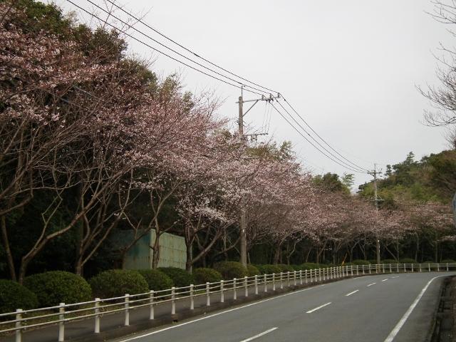 20120330sakuranosato2.jpg