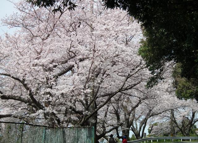 20120402wasansirou3.jpg