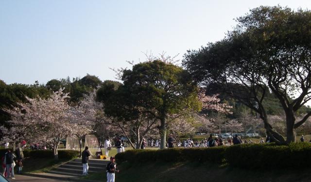 20120408sakuranosato2.jpg