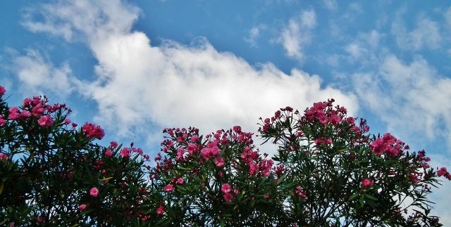 20120809kyoutikutou1.jpg