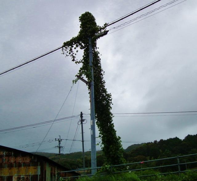 20120916kazura (640x589).jpg