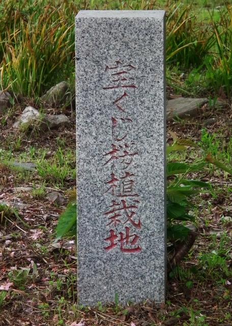 20120929kounoura9 (456x640).jpg