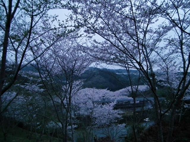 20150402sakura3.jpg