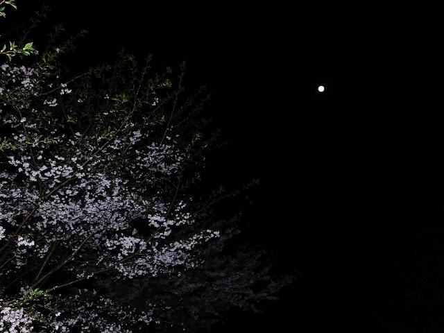20170411tukitosakura.jpg